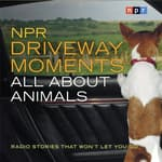 NPR Driveway Moments: All About Animals by  Steve Inskeep audiobook