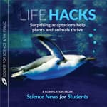 Life Hacks by  Andrew Grant audiobook