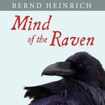 Mind of the Raven by Bernd Heinrich audiobook