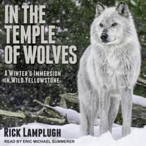 In the Temple of Wolves by Rick Lamplugh audiobook