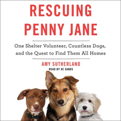 Rescuing Penny Jane by Amy Sutherland audiobook