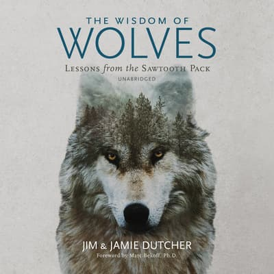 The Wisdom of Wolves by Jim Dutcher audiobook