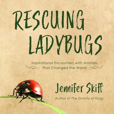 Rescuing Ladybugs by Jennifer Skiff audiobook
