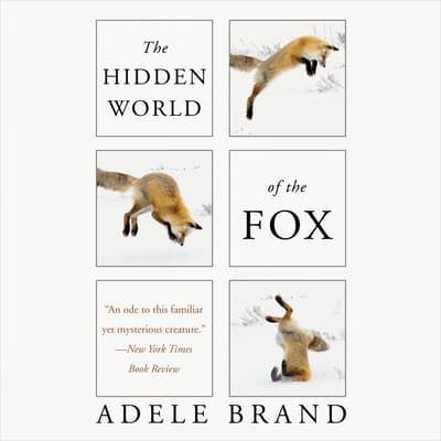 The Hidden World of the Fox by Adele Brand audiobook