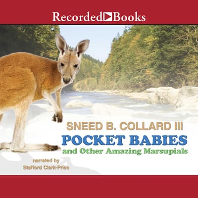 Pocket Babies and Other Amazing Marsupials by Sneed B. Collard audiobook